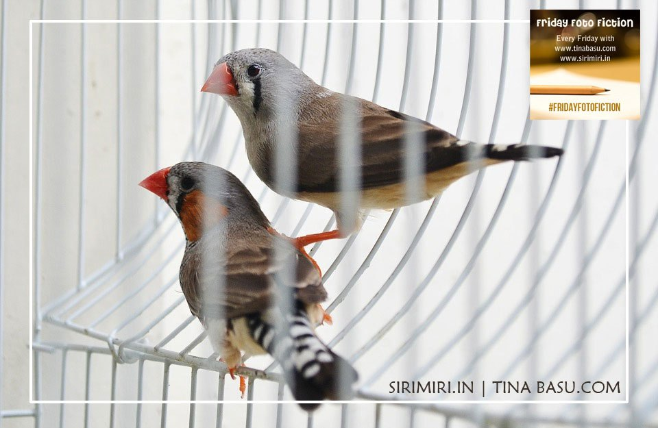 #FridayFotoFiction: Caged Forever